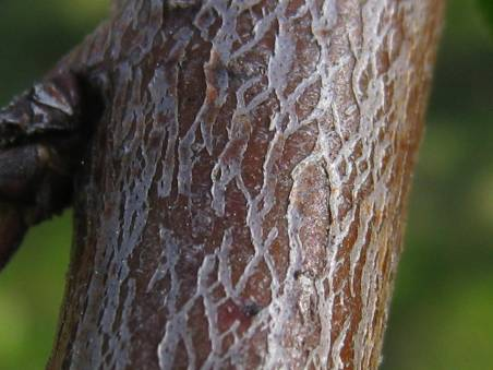 tree bark image