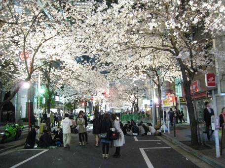 Cherry Blossoms Lining the Street in Tokyo