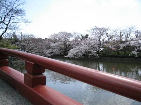 Red Bridge with Cherry Blossoms and Water