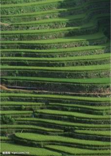 Yun Nan terraces