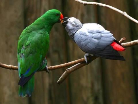 a bird kiss