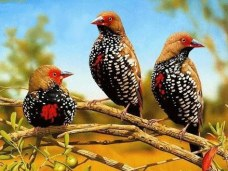 birds picture